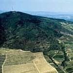 Tokaji borvita: 2011-ig csak egy maradhat