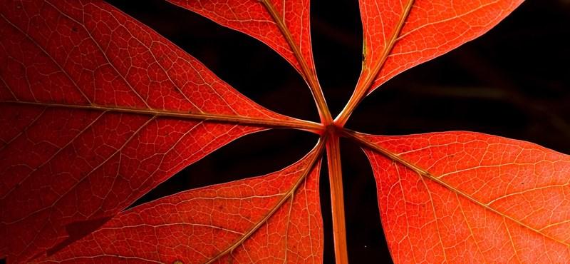 Hidegfronttól lesz még szomorúbb az ősz, de csütörtöktől újra kisüt a nap