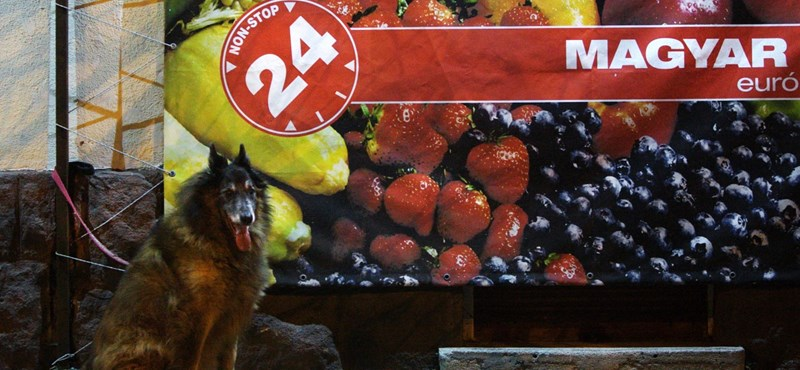 Düh és dac: Mégis kinek jó a nonstop boltok kinyírása?