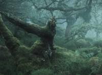 Ebben az erdőben biztos tündérek laknak, kár, hogy Angliában van