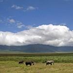 Beperelte az utazási irodát, mert nem lőhetett elefántot