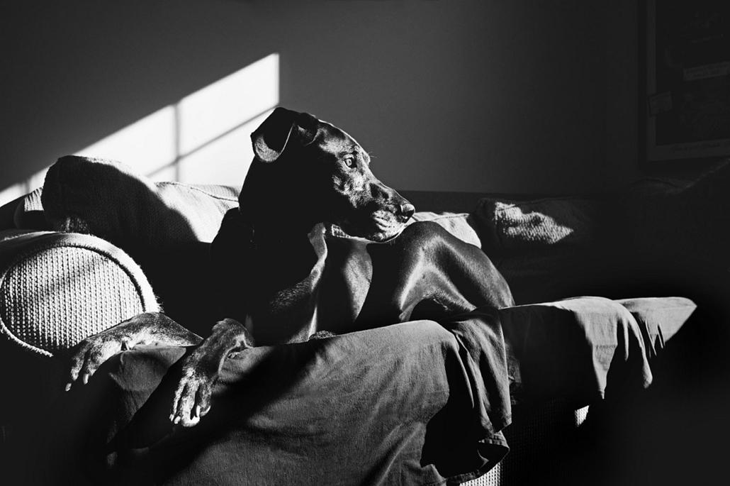 NE használd, nagyításhoz kértük!!! - kutyák altatás előtt - vito--055b