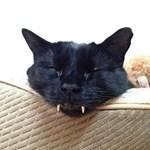 Nem találtak más gyanúsítottat, egy kóbor macska lehetett a gyilkos