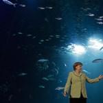 A nap képe: halaknak integetett Angela Merkel