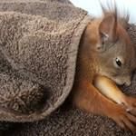 Meglágyította az internetet az elgázolt borsodi mókus története