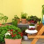 Hogyan varázsoljunk kertet a balkonra?