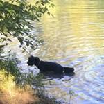 A szennyezés miatt nem javasolják, hogy kutyákat fürdessenek a Dunában