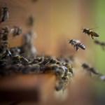 Egy szobában voltunk közel egymillió méhhel
