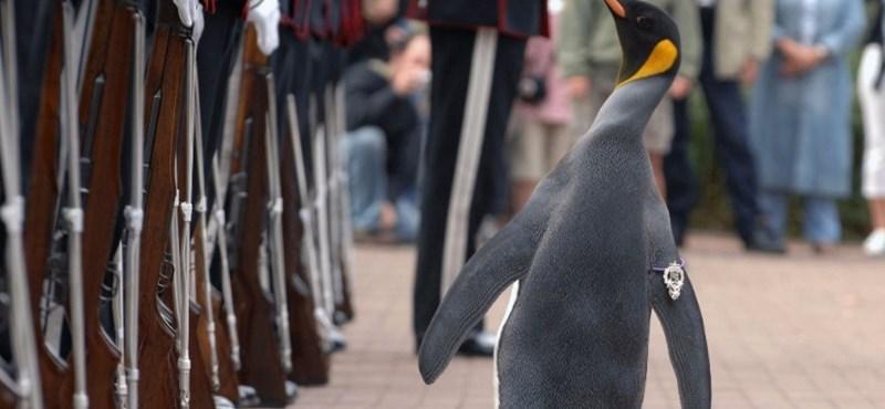 Katonai vezetőt csináltak egy pingvinből Norvégiában