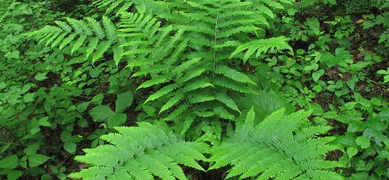 A legjobb légtisztító szobanövények - a dohányfüstöt is kiszűrik