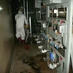 Megkezdték a fukusimai atomerőmű 1-es reaktorában a munkát