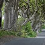 Szélvihar csavarta ki a Trónok harca egy ikonikus fáját