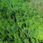 Egyre alacsonyabbra nőnek a fák – és ez igen nagy baj