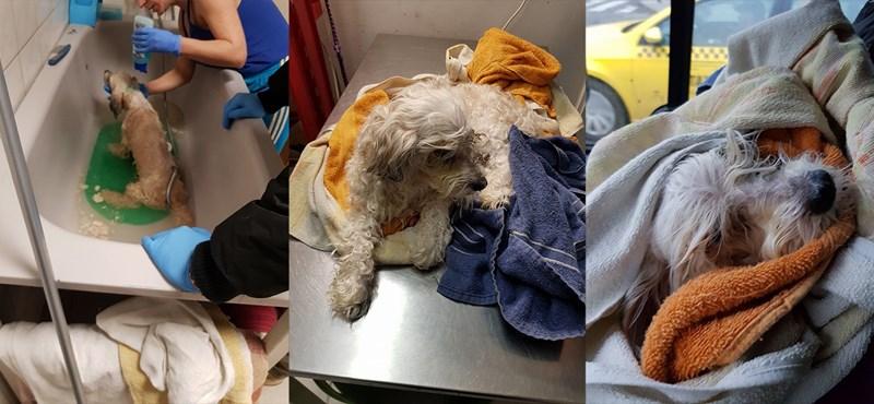 18+: Több hétig élt gazdija holttestéhez bújva egy kutya Újpesten