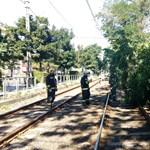 Fotó: Fa dőlt a 28-as és 62-es villamos sínére