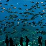 Lenyűgöző videó: ennyire mélyek az óceánok