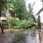 Megjött a vihar: fákat tépett ki a szél Nógrád megyében