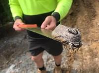 Kétökölnyi méretű lepke került elő egy ausztrál építkezésen