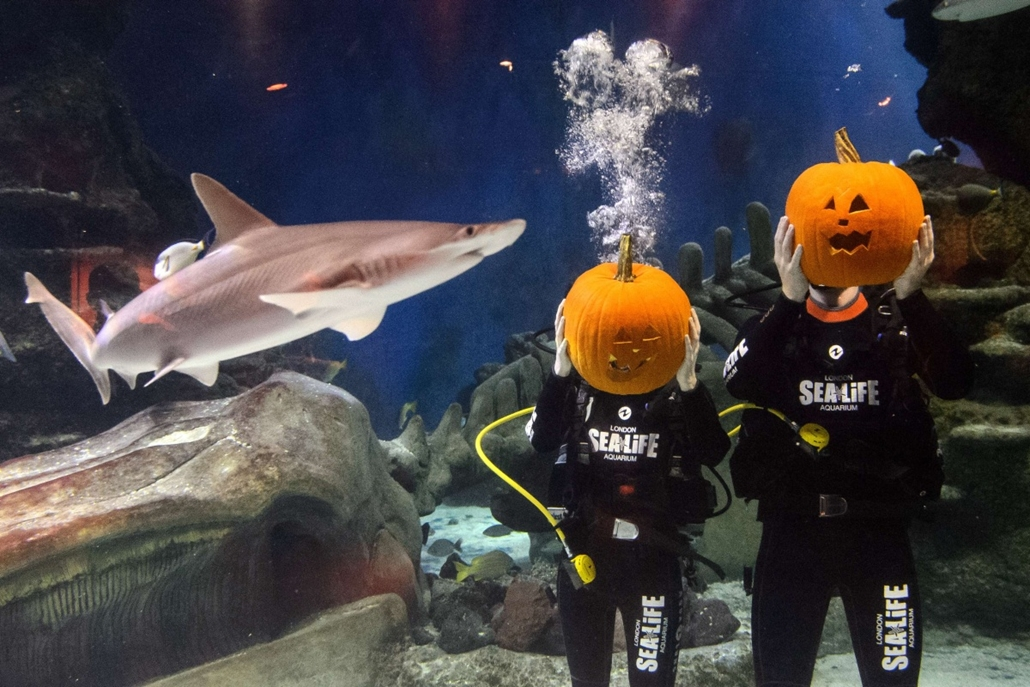 afp. hét képei - London, Egyesült Királyság, 2014.10.24. Divers hold their pumpkins after carving them in a fish tank during a photo call to mark Halloween season at the London Aquarium in central London on October 24, 2014.