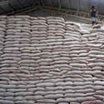 Humán albumin nyerhető génmódosított rizsből