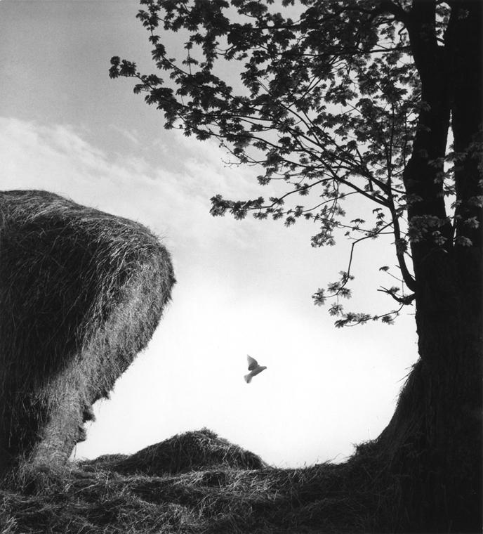 Élet indul mindenütt, 1963/1984 - Magyar sorsok és életművek - Nagyítás-fotógaléria, kiállítás