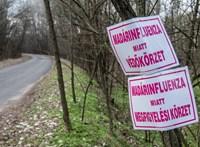 Madárinfluenza: nem volt fertőzött állat a leölt 27 ezres békési kacsaállományban