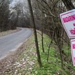 Már 226 állattartó telepen mutatták ki a madárinfluenzát két magyarországi megyében