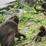 Óriási majomszökés volt Párizsban, evakuáltak egy állatkertet