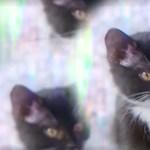 Macskákkal forgattak újra horrorfilmeket