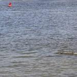 Fotó: Alacsony a vízállás, kilátszik az Ínség-szikla a Dunából