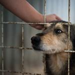 A megfőzéstől megmentett kutyát fogadott örökbe az új dél-koreai elnök