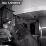 Lelőtték a notórius torkos medvét Coloradóban, miután egy konyhában falatozott – videók