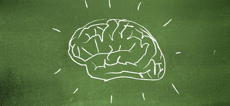 Kiszámolták, mekkora helyet foglal el az agyban a nyelvismeret