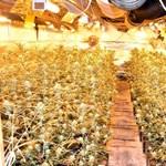 Roskadásig volt a keceli ház marihuánával – videó
