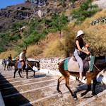 A túlsúlyos turistáktól próbálja védeni a szamarakat Görögország
