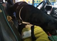 50 fokos furgonban hagyta kikötve a kutyát, állatkínzás a gyanú