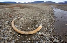 Ontja magából a föld a mamutcsontokat, de mit kezdünk velük?