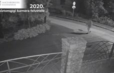 Éveken át mérgezte szomszédja kutyáját egy pécsi férfi - videó