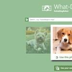 Próbálja ki: egyetlen fotóról felismeri a kutyákat a Microsoft új weboldala