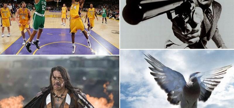 Napi tévéajánló: NBA, Kispál és a Borz, Piszkos Harry, Sorsfordító állatok