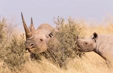 Rinocéroszságunkhoz nem fér kétség – könyvajánló