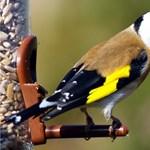 Élő védett madarakkal volt tele egy román kisbusz raktere Nagylaknál