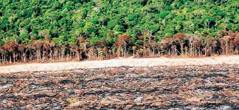 Hat másodpercenként irtottak ki egy focipályányi őserdőt tavaly