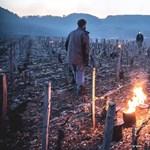 Hiába küzdöttek a gazdák, oda a termés java Bordeaux-ban