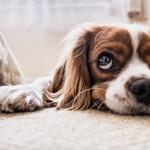 Kutyaeledeleket hív vissza a Fressnapf