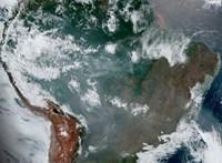 Megnőtt a maláriás fertőzések száma az amazóniai erdőirtások miatt