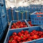 Az élelmiszerek majdnem fele tartalmaz növényvédő szert