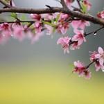 Csípős reggel után kellemes tavaszi idő lesz