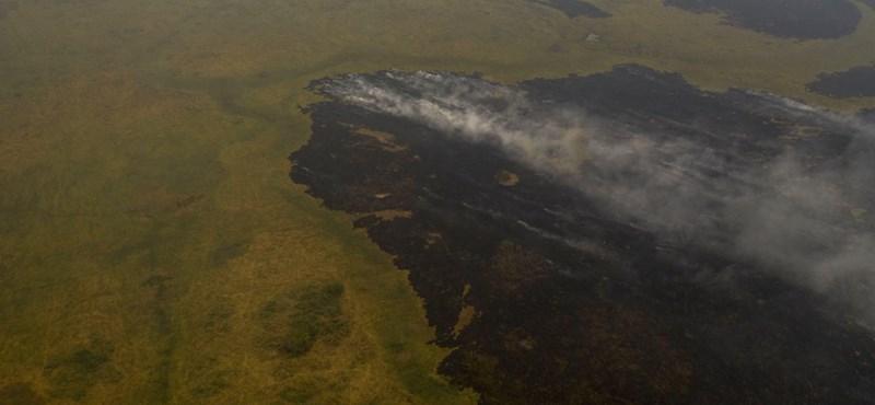 1,4 millió hektár égett már le Brazíliában, vészhelyzetet rendeltek el