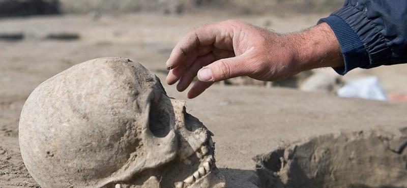 Vizsgálják az Afrikából összehordott koponyák rejtélyét Berlinben